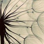Mindfulness-geeft-focus